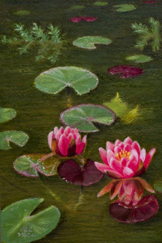 small painting of pink water lilies on pond