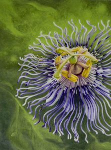 painting of a passionflower