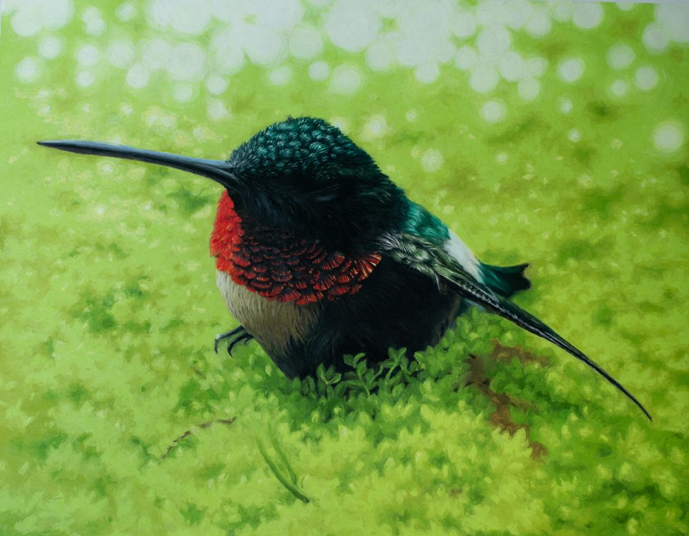 painting of hummingbird at rest